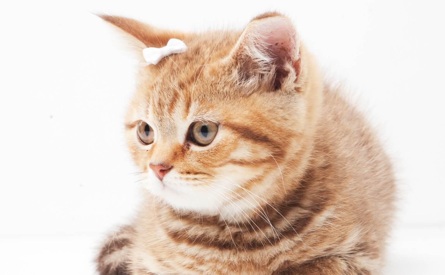 猫の玉ねぎ中毒