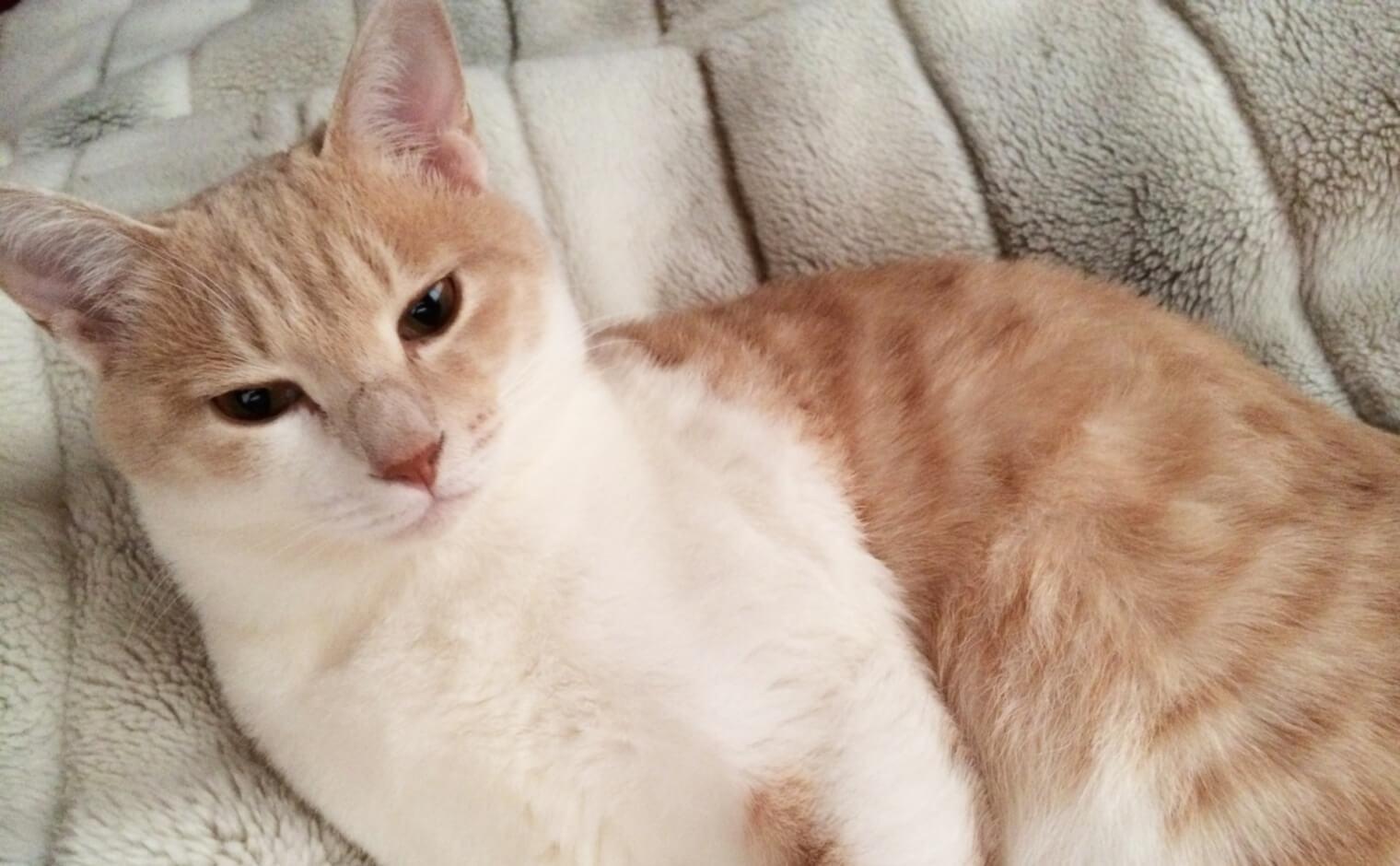猫の肝機能障害