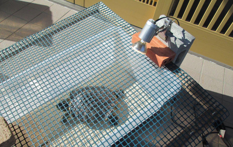 亀の日光浴