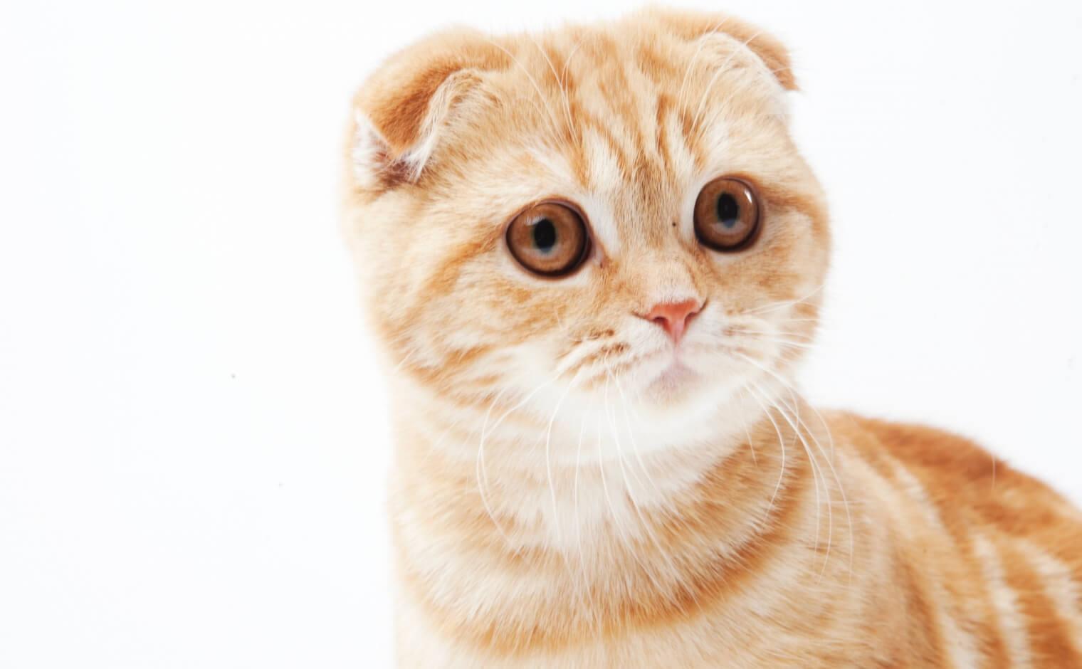 猫が毎日吐く