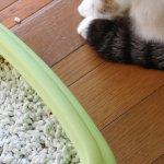 猫の下部尿路結石症とは? 治療や予防方法を正しく理解しよう!