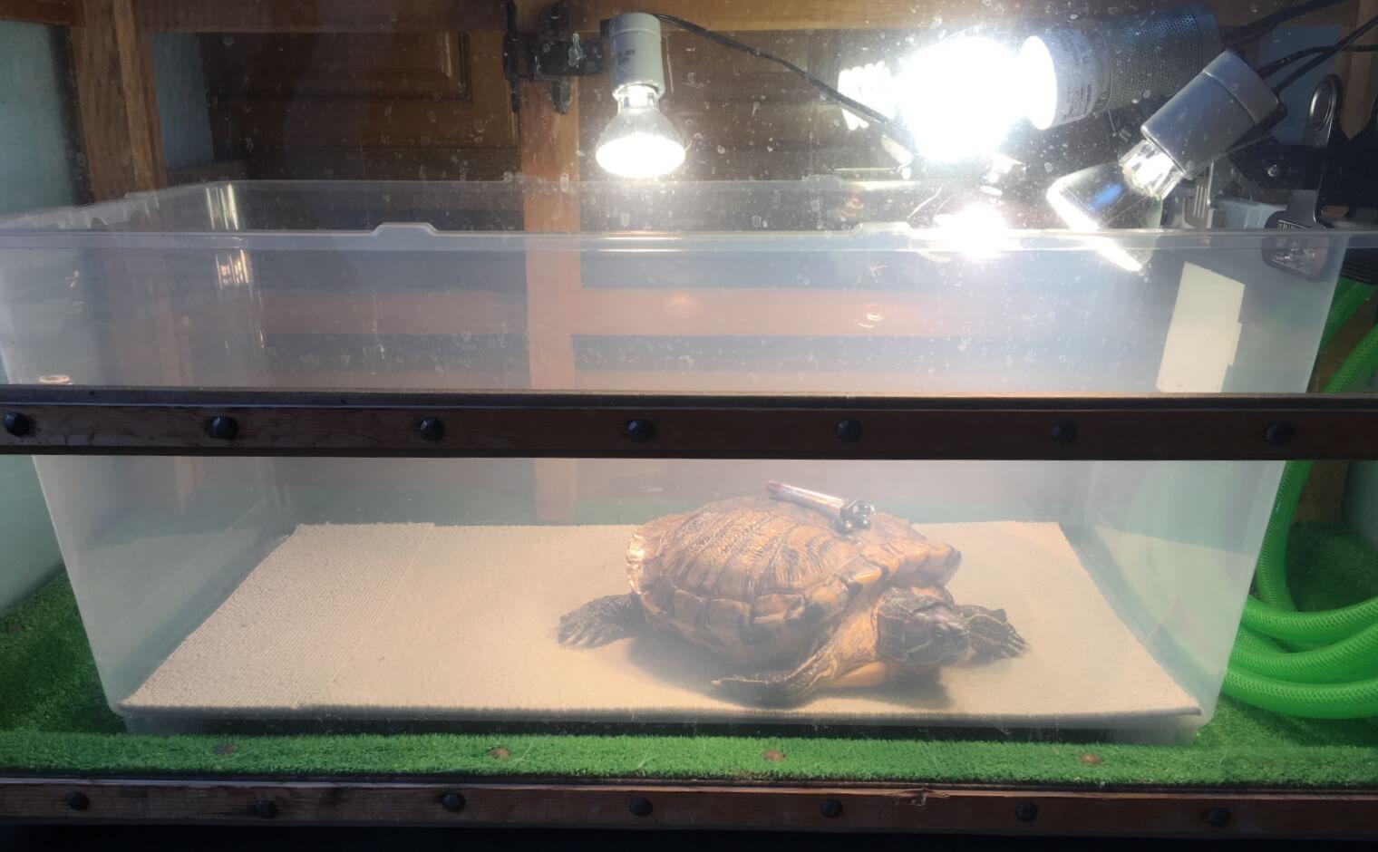 亀の足が動かない時の対処法